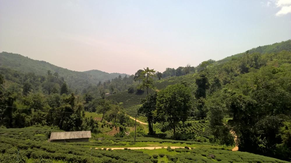Chiang Rai (20)