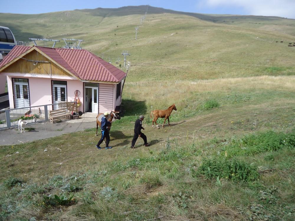 Armenia (40)