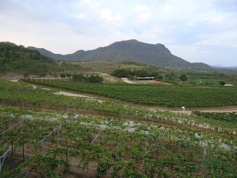 Hua Hin Hils Vineyard