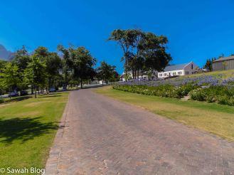 stellenbosch-10