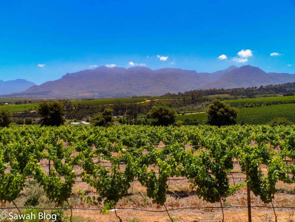 Stellenbosch (28).jpg